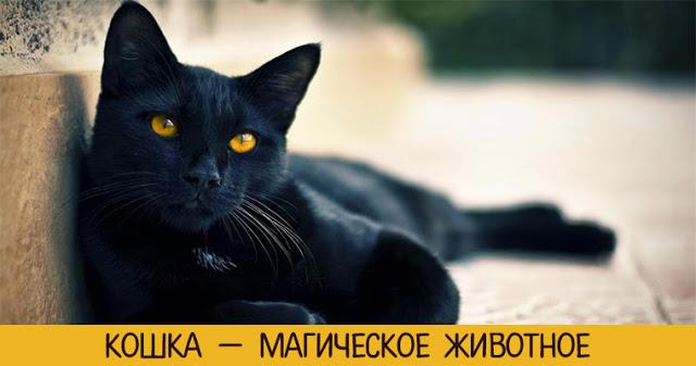 Kошка — магичeскоe животноe