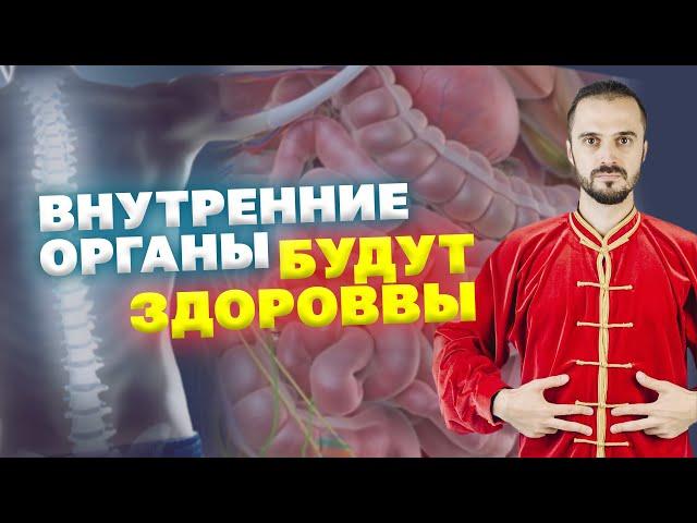Позвоночник и внутренние органы. Связь и  влияние друг на друга